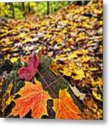 Fall Leaves In Forest Metal Print by Elena Elisseeva