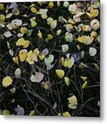 Fall Leaves Metal Print by John Wong