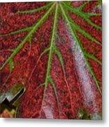 Fall On The Vine Metal Print by Kim Hymes