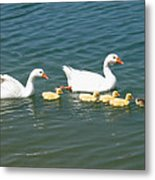 Family Outing On The Lake Metal Print by Ed Churchill