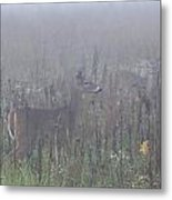 Fawn At Dawn Metal Print by Charles Warren