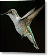 Female Hummingbird Metal Print by DansPhotoArt on flickr