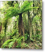 Fern Tree Metal Print by MotHaiBaPhoto Prints