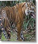 Ferocious Tiger Metal Print by Brendan Reals