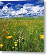 Field Of Flowers, Grasslands National Metal Print by Robert Postma