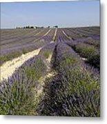 Field Of Lavender. Valensole. Provence Metal Print by Bernard Jaubert