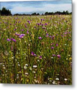 Field Of Thistles Metal Print by Tamyra Ayles