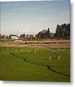 Field With Irrigation Pipes Metal Print by David Buffington
