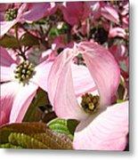Fine Art Prints Pink Dogwood Flowers Metal Print by Baslee Troutman