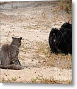 First Impressions Metal Print by Al Powell Photography USA