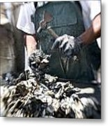 Fisherman Separating Clumps Of Oysters Metal Print by Tyrone Turner