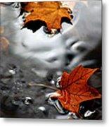 Floating Maple Leaves Metal Print by LeeAnn McLaneGoetz McLaneGoetzStudioLLCcom