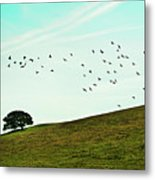 Flock Of Birds Metal Print by Where Photography meets Graphic Design.