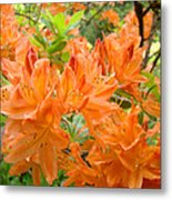 Floral Art Prints Orange Rhodies Flowers Metal Print by Baslee Troutman
