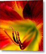 Floral Macro Of A Blossom Metal Print by Floyd Menezes