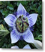 Floral Passion Metal Print by Eric Kempson