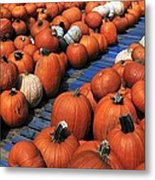 Florida Gator Pumpkins Metal Print by David Lee Thompson
