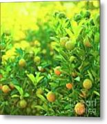 Flower Market Metal Print by MotHaiBaPhoto Prints