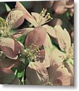 Flowering Crabapple Muted Metal Print by Mark J Seefeldt