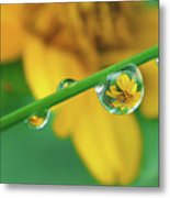 Flowers In Water Droplets Metal Print by Thank you.