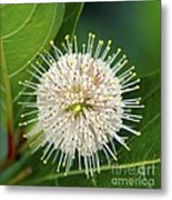 Flowers Of The Forest Series Metal Print by Terry Troupe