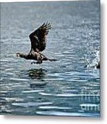 Flying Cormorant Bird Metal Print by Mats Silvan
