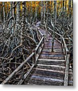 Footpath In Mangrove Forest Metal Print by Adrian Evans
