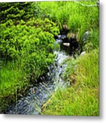Forest Creek In Newfoundland Metal Print by Elena Elisseeva