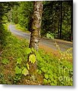 Forest Escape Metal Print by Idaho Scenic Images Linda Lantzy