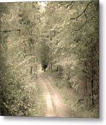 Forest Path Metal Print by Svetlana Sewell