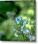 Forget-me-not Grunge Metal Print by Darren Fisher