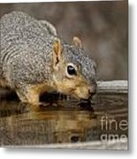 Fox Squirrel Metal Print by Lori Tordsen
