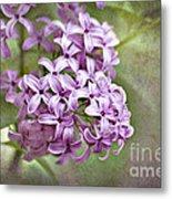 Fragrant Purple Lilac Metal Print by Cheryl Davis