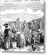 France: Grape Harvest, 1854 Metal Print by Granger
