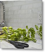Fresh Basil Herb Leaves From The Garden Metal Print by Marlene Ford