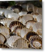 Fresh From The Sea Metal Print by Heather Applegate