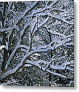 Fresh Snowfall Blankets Tree Branches Metal Print by Tim Laman