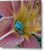 Frog In The Day Lilly Metal Print by Jeremiah Colley