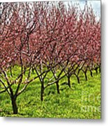 Fruit Orchard Metal Print by Elena Elisseeva