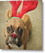 Funny Boxer Puppy Metal Print by Jody Trappe Photography