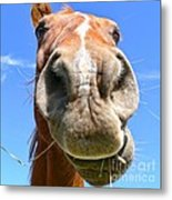 Funny Brown Horse Face Metal Print by Jennie Marie Schell