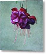 Fuschia Flower Metal Print by Kim Hojnacki