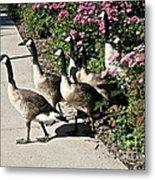 Garden Geese Parade Metal Print by Susan Herber