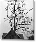 Gnarled Metal Print by Pamela Patch