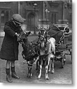 Goat Cart Metal Print by Fox Photos