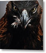 Golden Eagle Feeding Metal Print by Pat Gaines