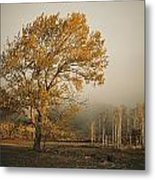 Golden Sunlit Tree With Mist, Yakima Metal Print by Sisse Brimberg