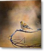 Goldfinch In Deep Thought Metal Print by J Larry Walker