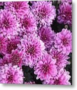 Grape Ice Metal Print by Elizabeth Sullivan