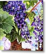 Grape Vines Metal Print by Karen Casciani